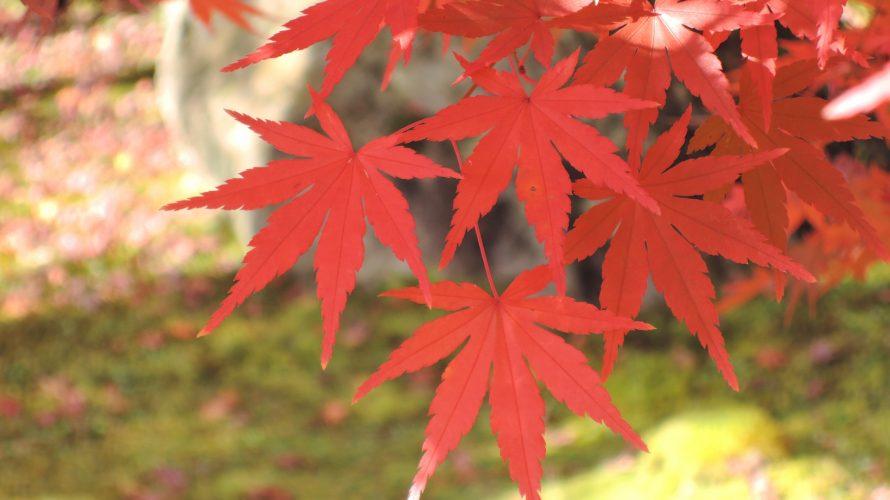 京都に10年住んだライターが思うこと。京都は、何をしてても、なーんか京都。