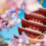 元イタリアンシェフ・ライターが花見に役立つ桜の情報を語る